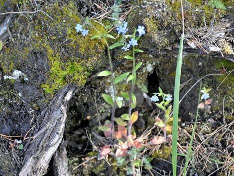 blomma vandring lom18